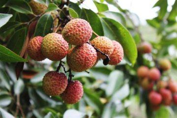 水果提货系统